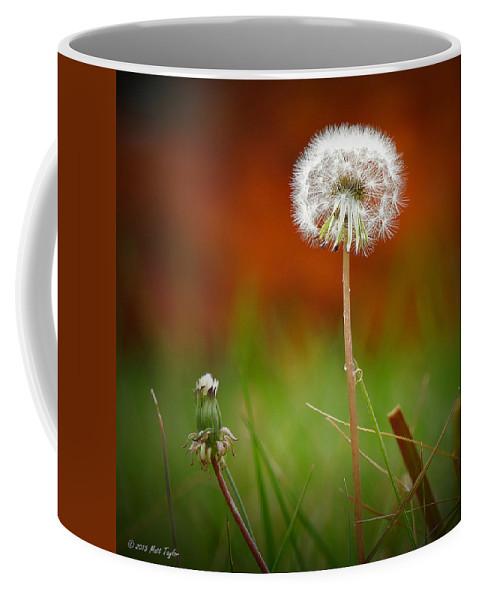 Nature Coffee Mug featuring the photograph Autumn Dandelion by Matt Taylor