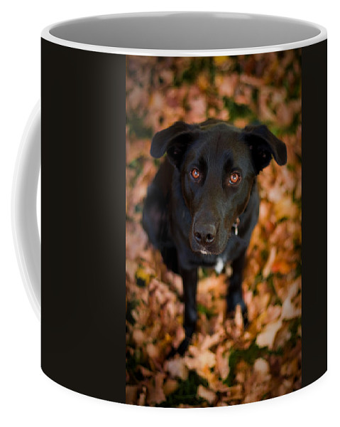 3scape Coffee Mug featuring the photograph Autumn Dog by Adam Romanowicz
