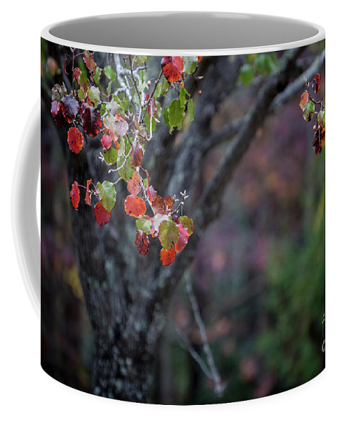 Autumn Coffee Mug featuring the photograph Autumn Fade by Dale Powell