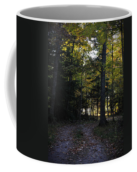 Fall Coffee Mug featuring the photograph Autumn Glen by Tim Nyberg