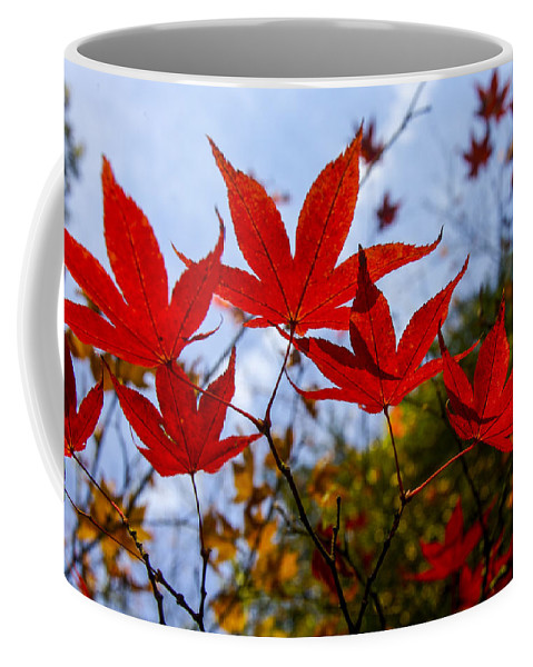 Landscape Coffee Mug featuring the photograph Autumn Glow by Christopher Rees