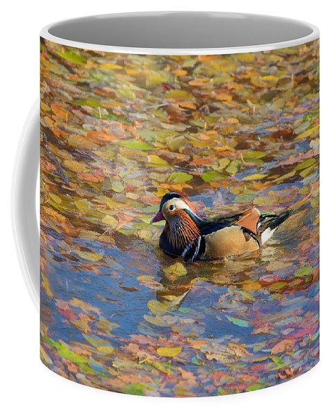 Autumn Coffee Mug featuring the photograph Autumn In Creek Mix by Leif Sohlman