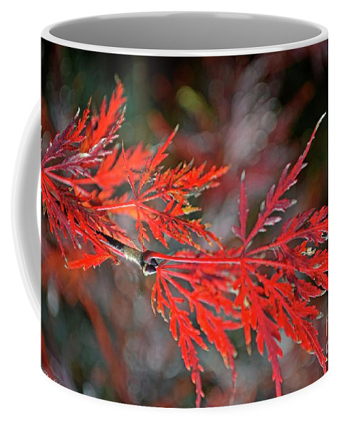 Tree Coffee Mug featuring the photograph Autumn Japanese Maple by Debbie Portwood