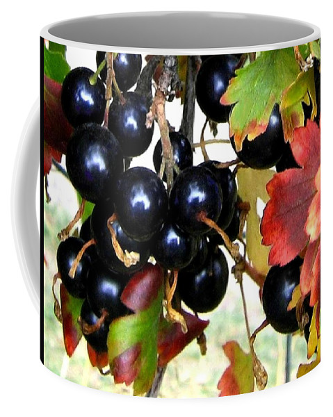Autumn Coffee Mug featuring the photograph Autumn Jostaberries by Will Borden