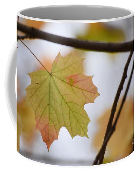 Maple Coffee Mug featuring the photograph Autumn Maple Leaves Horizontal by Rowena Throckmorton