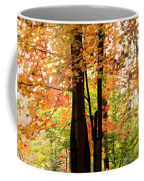 Nature Coffee Mug featuring the photograph Autumn Mix by Dorothy Lee