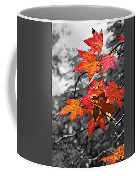 Photography Coffee Mug featuring the photograph Autumn On Black And White by Kaye Menner
