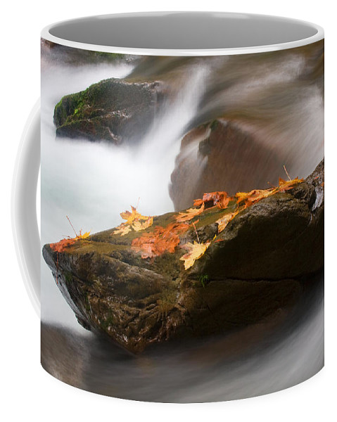Leaves Coffee Mug featuring the photograph Autumn Resting Place by Mike Dawson