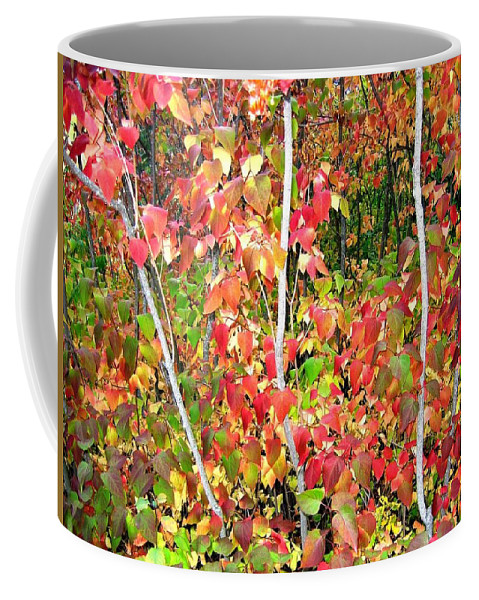 Autumn Coffee Mug featuring the photograph Autumn Sanctuary by Will Borden