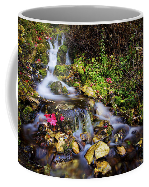 Nature Coffee Mug featuring the photograph Autumn Stream by Chad Dutson