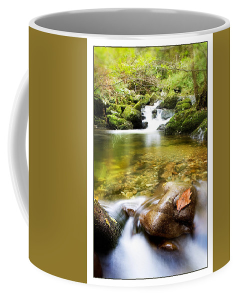 Stream Coffee Mug featuring the photograph Autumn Stream by Mal Bray