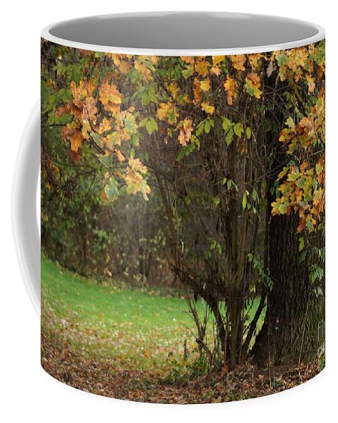 Prott Coffee Mug featuring the photograph Autumn Tree 2 by Rudi Prott
