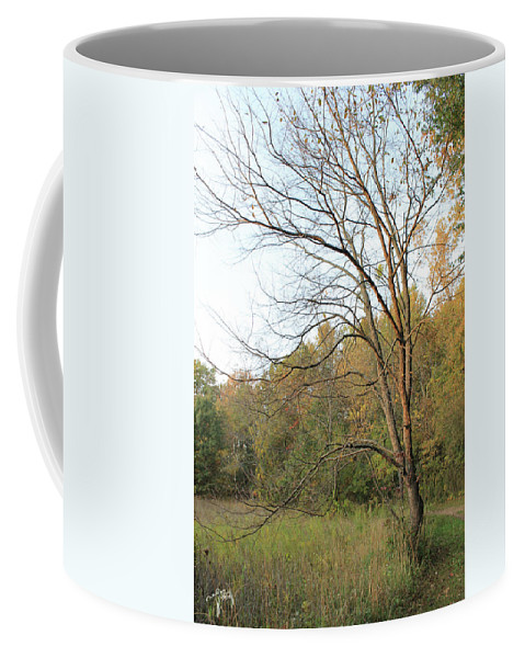 Tree Coffee Mug featuring the photograph Autumn Tree At Sunset Light by Catalina Diaz