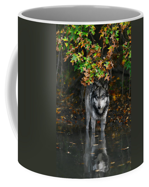 Wolf Wolves Lupine Canis Lupus Wildlife Animal Photography Photograph Coffee Mug featuring the photograph Autumn Wolf by Shari Jardina