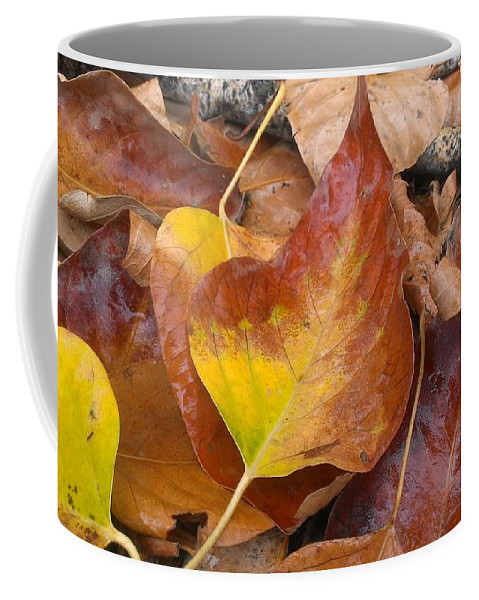Autumn Coffee Mug featuring the photograph Autumns Color Palette by LKB Art and Photography