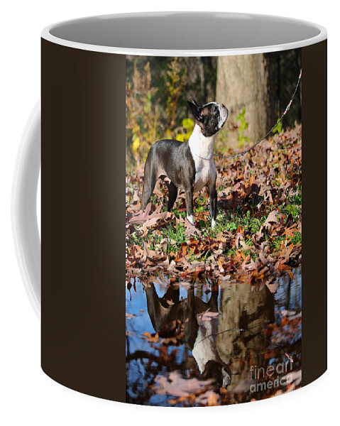 Animal Coffee Mug featuring the photograph Autumn's Reflection by Susan Herber