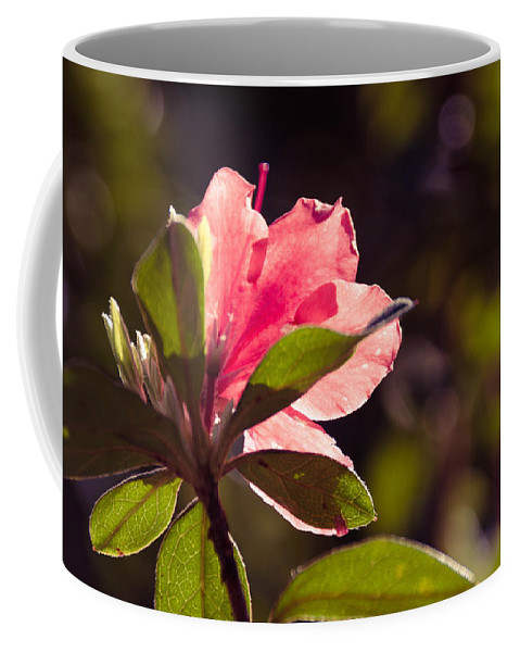 Azalea Coffee Mug featuring the photograph Azalea 2 by Andrea Anderegg
