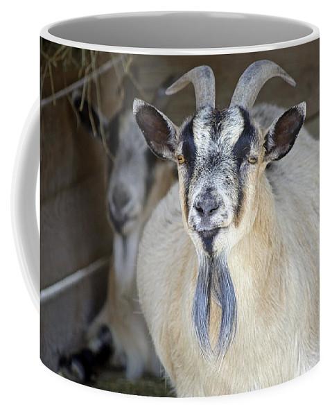 Goat Coffee Mug featuring the photograph Baaad by Kenneth Albin