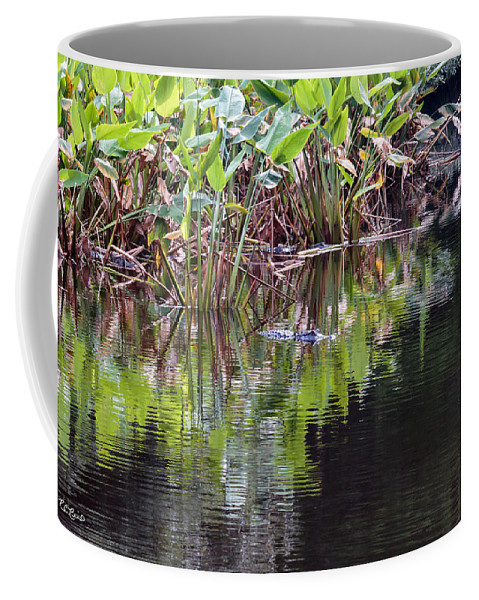 Florida Coffee Mug featuring the photograph Babcock Wilderness Ranch - Alligator Den by Ronald Reid