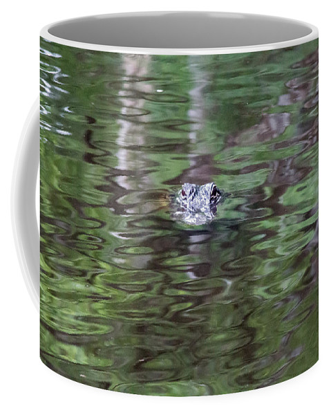 Florida Coffee Mug featuring the photograph Babcock Wilderness Ranch - Alligator Lake - Heads Up by Ronald Reid