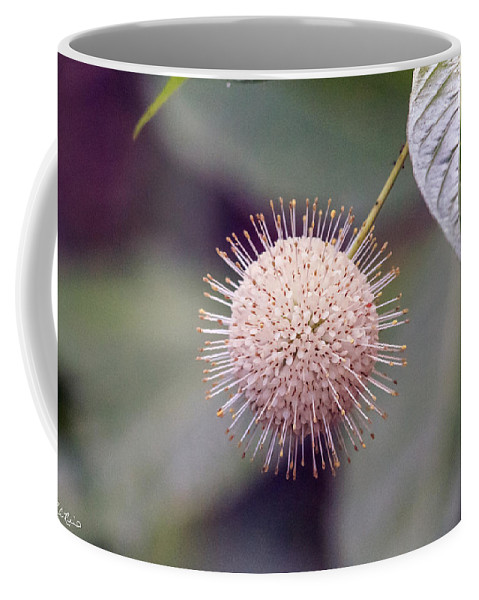 Florida Coffee Mug featuring the photograph Babcock Wilderness Ranch - Buttonbush by Ronald Reid