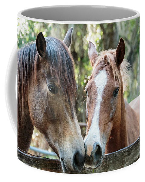 Florida Coffee Mug featuring the photograph Babcock Wilderness Ranch - Horse Friends Forever by Ronald Reid