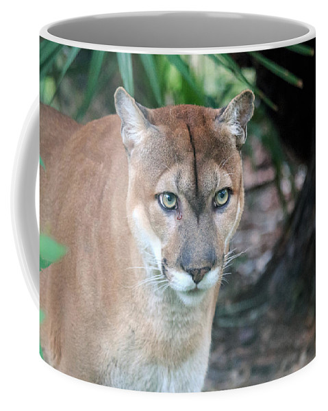 Florida Coffee Mug featuring the photograph Babcock Wilderness Ranch - Oceola The Panther Gazing by Ronald Reid