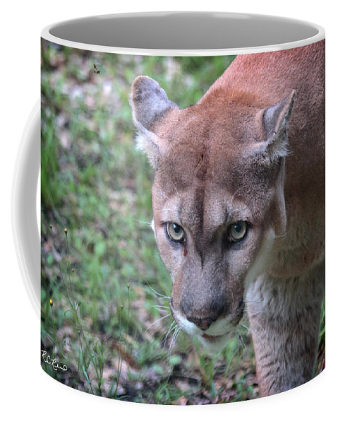 Florida Coffee Mug featuring the photograph Babcock Wilderness Ranch - Oceola The Panther On The Prowl by Ronald Reid