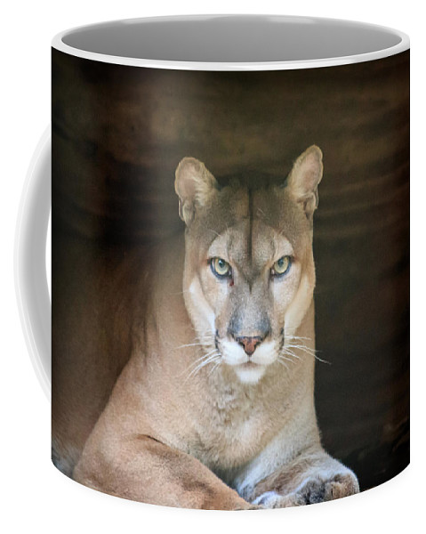 Florida Coffee Mug featuring the photograph Babcock Wilderness Ranch - Portrait Of Oceola The Panther by Ronald Reid