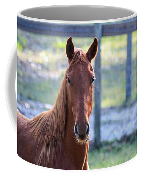 Florida Coffee Mug featuring the photograph Babcock Wilderness Ranch - Red Horse Portait by Ronald Reid