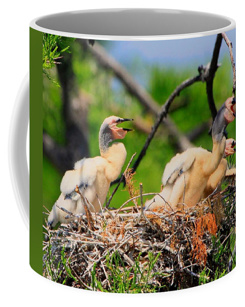 Anhinga Coffee Mug featuring the photograph Baby Anhinga Chicks by Barbara Bowen