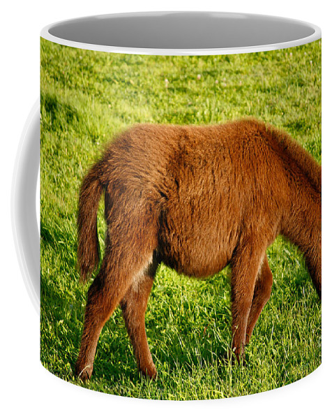 Animals Coffee Mug featuring the photograph Baby Donkey by Gaspar Avila