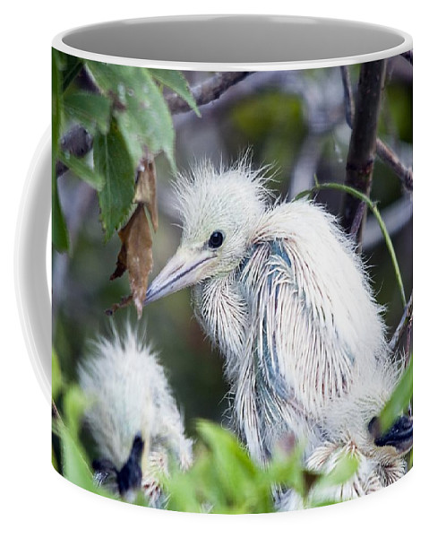 Bird Coffee Mug featuring the photograph Baby Egret by Kenneth Albin