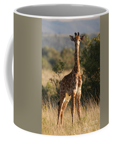 Giraffe Coffee Mug featuring the photograph Baby Giraffe by Andy Smy