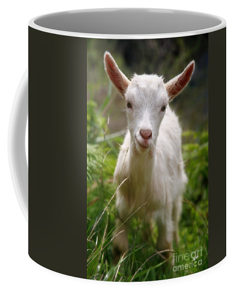 Animals Coffee Mug featuring the photograph Baby Goat by Gaspar Avila