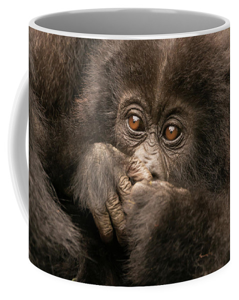 Africa Coffee Mug featuring the photograph Baby Gorilla Close-up Hiding Mouth With Hands by Ndp