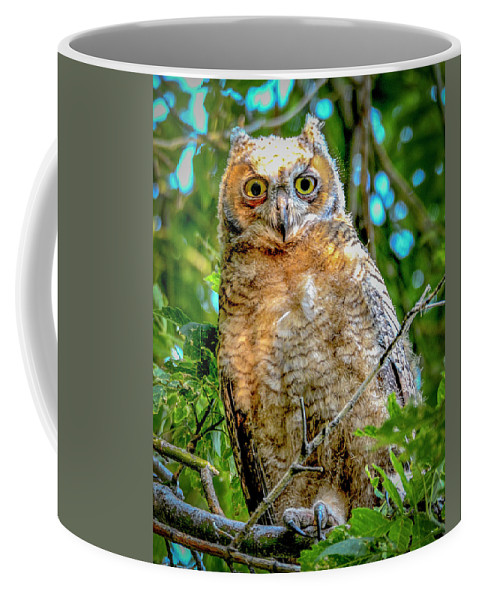 Baby Great Horned Owl Coffee Mug featuring the photograph Baby Great Horned Owl by Norman Hall