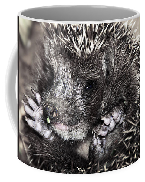Animal Coffee Mug featuring the photograph Baby Hedgehog by Svetlana Sewell