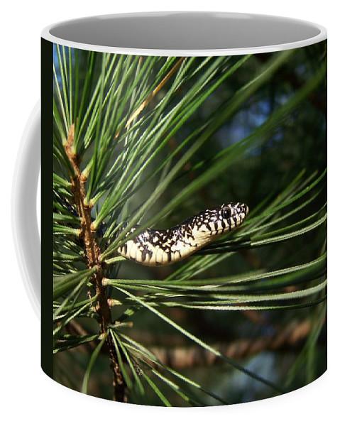 Snake Coffee Mug featuring the photograph Baby King Snake by Jai Johnson