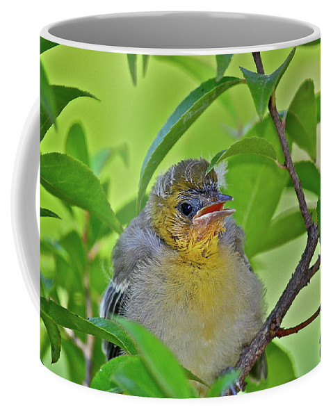 Birds Coffee Mug featuring the photograph Baby Oriole by Diana Hatcher