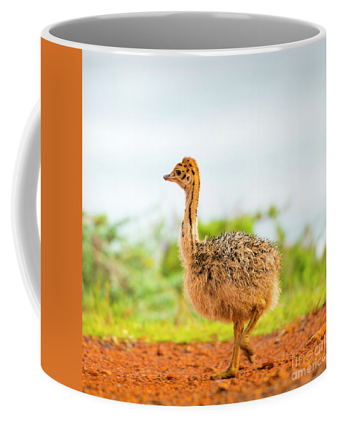 Ostrich Coffee Mug featuring the photograph Baby Ostrich by Tim Hester
