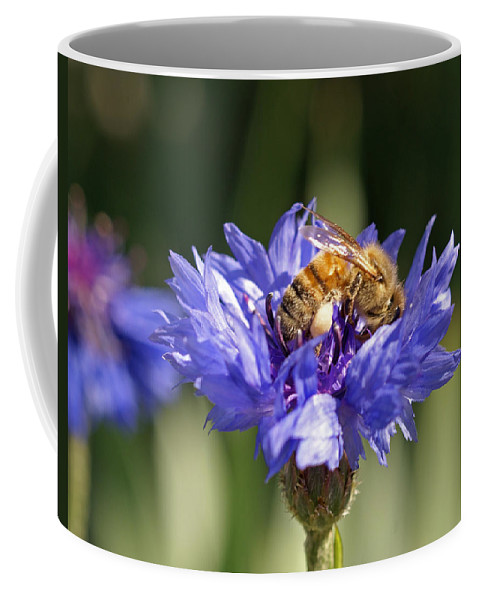 Bee. Flower Coffee Mug featuring the photograph Bachelor Button And Bee by Heather Coen
