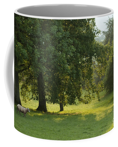 Sheep Coffee Mug featuring the photograph Back From The Meadow by Angel Ciesniarska