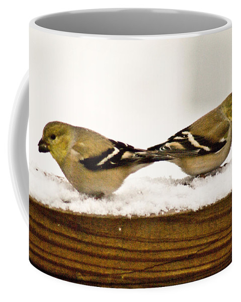 American Coffee Mug featuring the photograph Back To Back American Gold Finches by Douglas Barnett