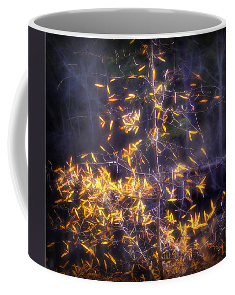 2d Coffee Mug featuring the photograph Backlit Beauty by Brian Wallace