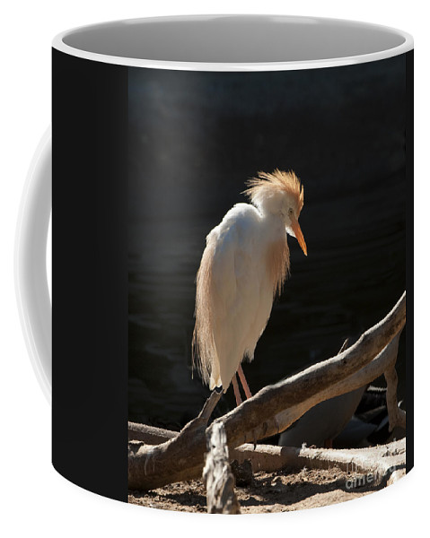 Bird Coffee Mug featuring the photograph Backlit Egret by Sandra Bronstein