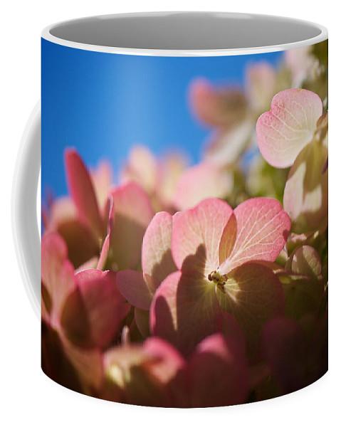 Hydrangea Coffee Mug featuring the photograph Backlit Hydrangea by Lisa Knechtel