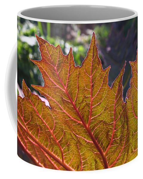 Leaf Coffee Mug featuring the photograph Backlit Leaf 2 by Mo Barton