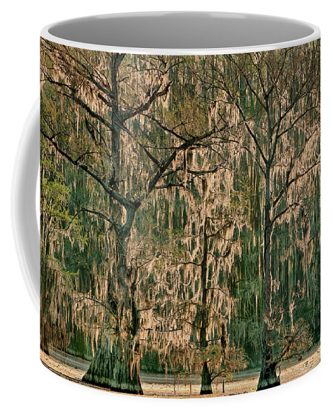 Dave Welling Coffee Mug featuring the photograph Backlit Moss-covered Trees Caddo Lake Texas by Dave Welling