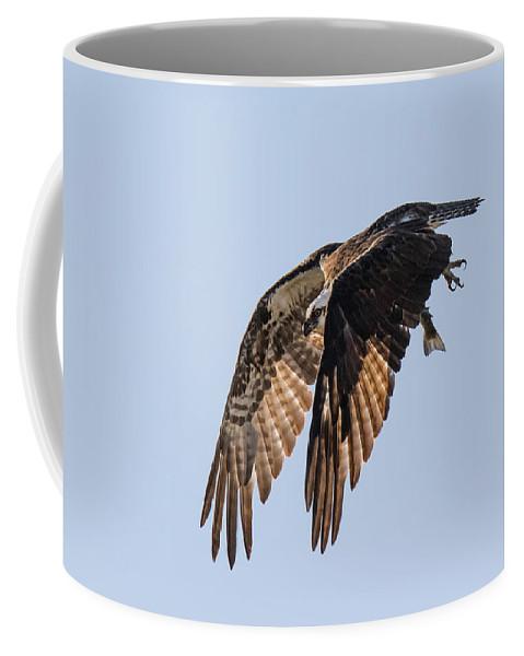 Osprey Coffee Mug featuring the photograph Backlit Osprey Takes Flight by Tony Hake